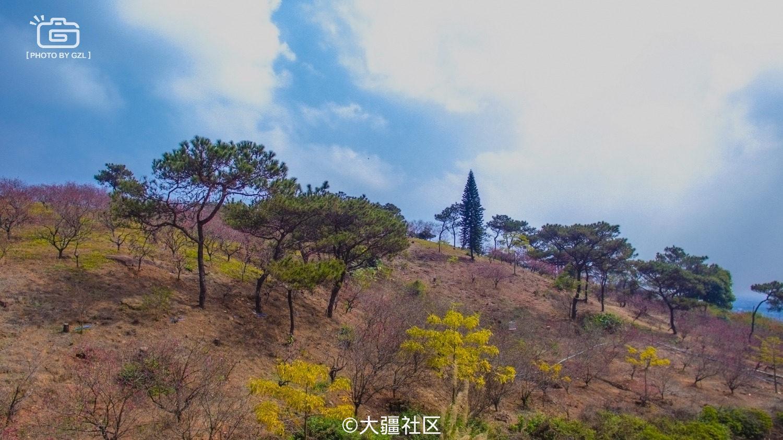 十八罗汉山桃花林